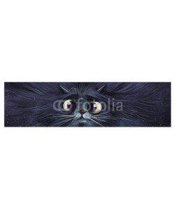 cirodelia, gato en primer plano