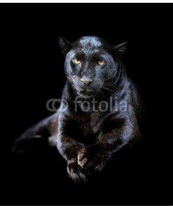 byrdyak, Black leopard