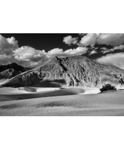 f9photos, Sand dunes. Nubra valley, Ladakh, India