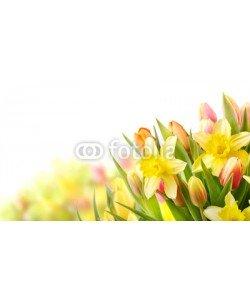 Floydine, Freisteller Tulpen und Narzissen zu Ostern
