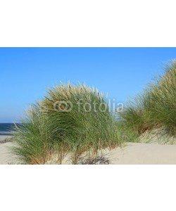 Kara, großer Strandhafer