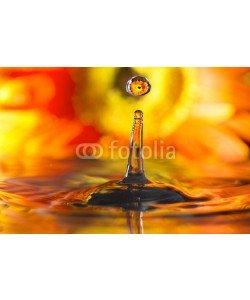 roberaten, reflection in drops orange flower