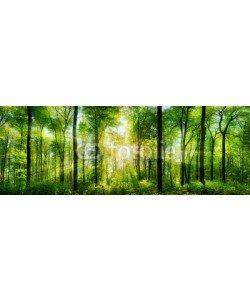 Smileus, Wald Panorama mit Sonnenstrahlen