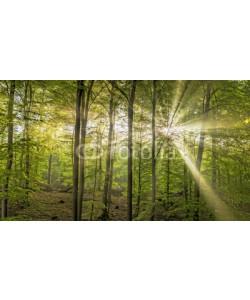 Blickfang, Sonne Nebel Wald