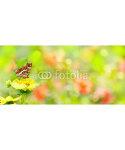 Floydine, Summer  -  Garden with beautiful flowers and butterfly