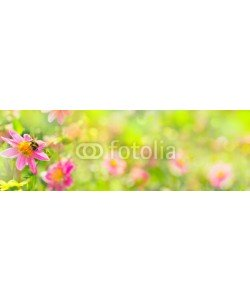 Floydine, Banner  -  Garden with beautiful flowers and bumble bee