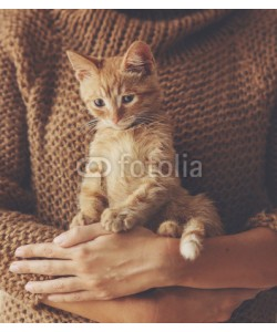 Alena Ozerova, Kitten sitting on hands