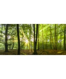 Blickfang, Sonne Nebel Wald Frühling