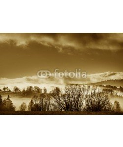 Vera Kuttelvaserova, morning fog and a forest