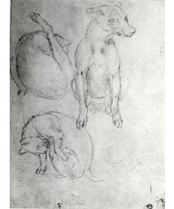 Leonardo da Vinci, Study of a dog and a cat, c.1480 (metalpoint on paper)