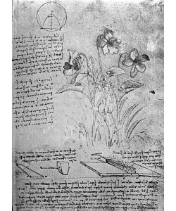 Leonardo da Vinci, Studies of Violas (Viola odorata and Viola canina), fol. 14r from Manuscript B, c.1487-90 (pen and ink on paper)