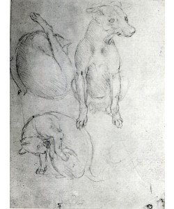 Leonardo da Vinci, Study of a dog and a cat, c.1480 (metalpoint on paper)