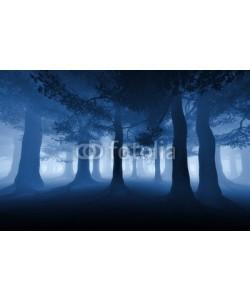 adimas, dark forest