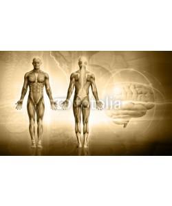 adimas, human body
