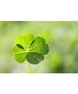AKI's Palette, four leaf clover