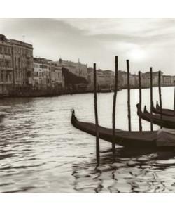 Alan Blaustein, Campo di Salute Venezia