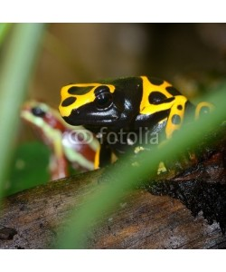 Aleksey Stemmer, Colorful frog in terrarium