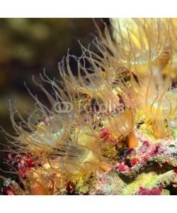 Aleksey Stemmer, Sea anemones  in marine aquarium