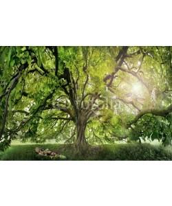 AlexanderLrs, Kastanien Baum