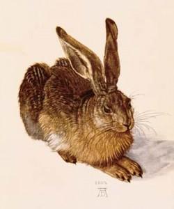 Albrecht Dürer, Junger Feldhase
