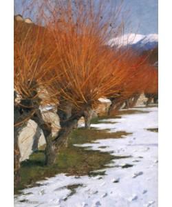 Alexander Koester, Weiden in der Wintersonne
