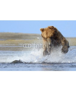 andreanita, Grizzly Bear jumping on fish