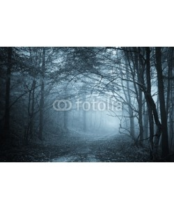 andreiuc88, blue light in a mysterious forest with fog