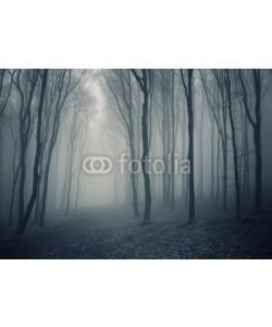 andreiuc88, elegant forest with fog