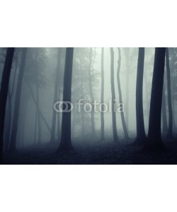 andreiuc88, fog in a beautiful forest with elegant trees