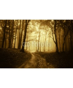 andreiuc88, horror scene with a road through golden forest with dark trees