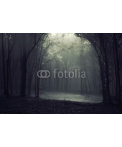 andreiuc88, Light in the forest