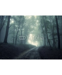 andreiuc88, man walking in a green forest with fog