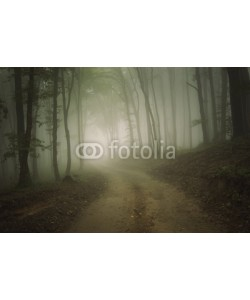 andreiuc88, road through a forest with fog in summer