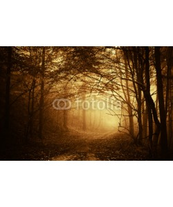 andreiuc88, warm light falling on a road in a dark forest in autumn