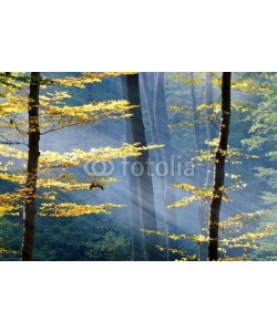 Anett Bakos, Lights of the autumn forest