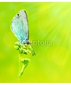 Anna Omelchenko, Beautiful butterfly