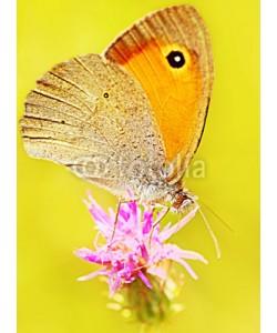 Anna Omelchenko, Beautiful yellow butterfly