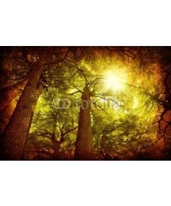 Anna Omelchenko, Cedar tree forest