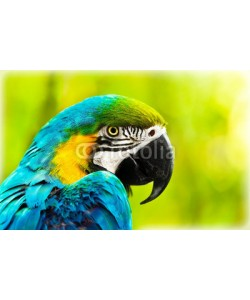 Anna Omelchenko, Exotic colorful African macaw parrot