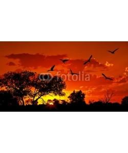 Anna Omelchenko, Landscape of Africa with warm sunset