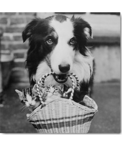 Anonym, A Dog Collie with Kittens