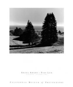 Ansel Adams, Pinetrees