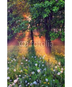 Anton Petrus, The rays of dawn sunlight illuminate the clearing with wildflowe