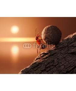 Antrey, ant Sisyphus rolls stone uphill on mountain, concept