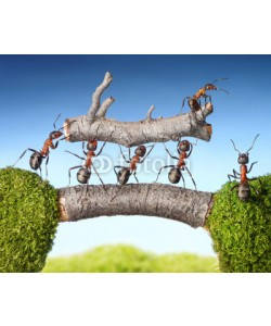 Antrey, team of ants carry log on bridge, teamwork