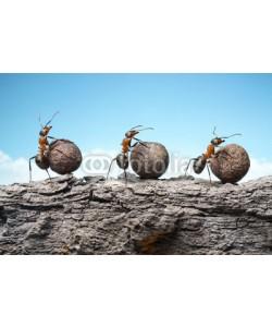 Antrey, team of ants rolling stones on rock, teamwork