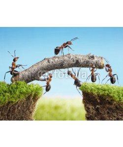 Antrey, teamwork, team of ants costructing bridge