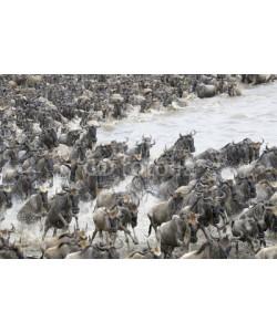 andreanita, Wildebeest crossing the Mara river