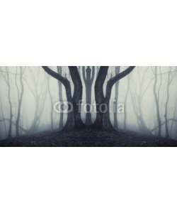 andreiuc88, big trees in a mysterious forest with fog after rain