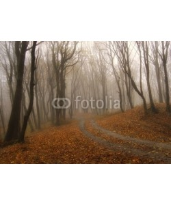 andreiuc88, fog in a colorful forest in autumn